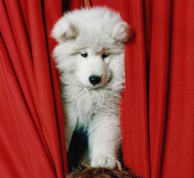 Puppywebsite_3
